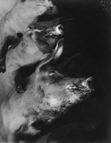 6-schweinekadaver-in-einem-pariser-schlachthaus-1949-1957-c-sammlung-julius-hummel-wien.jpg