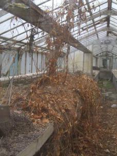 Das filigrane Gewächshaus springt sofort ins Auge. Sein desolter Zustand zeigt sich erst, wenn man sich ihm nähert.